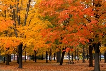 Autumn / by Ms. Janis