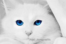 { CATS } / by Pamela Goulart