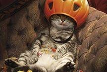 Halloween Treats / Who doesn't like to be a little afraid?