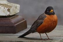 Birds & More Birds / by Robin Leigh Anderson