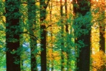 Woods & Trees / by Robin Leigh Anderson