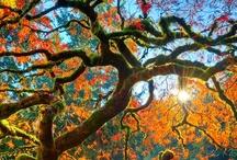 Ősz ( Autumn )