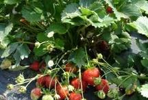 What's in my Garden / by Allison Cahill Scottsdale Luxury Properties