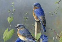Beauty of Nature -- Birds / by Barbara Mowdy