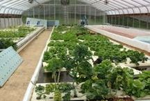 Urban Agriculture / Keeping you informed on the urban agriculture scene.  / by Local Food Lab