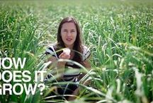Documentaries / Check out these great food documentaries.  / by Local Food Lab