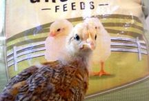 Animals and Livestock  / by Local Food Lab
