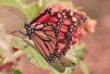 Beauty in Butterflies / by ShabbyPinkGirl