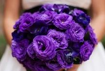 Purpleluv / by Melissa Finch