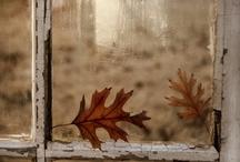 Color Inspiration: Autumn / by azureus
