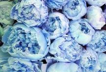Color Story: Blue Moods