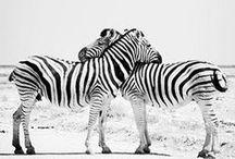 Black & White / The trend of the season.