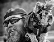 Fast N Furry / For Four Legged Bikers Only - Two wheels move the soul, four legs move the heart!