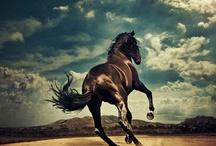 horses horses horses / by Katie VanLangen