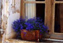 Window Boxes & Planters