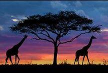 KENYA / by Abby Grove