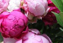 flowers / by Robin Lavertu