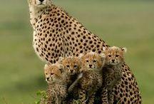 ANIMALS / by Robin Lavertu