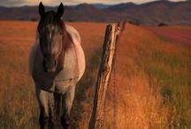 Horses / by Kristy Nunley