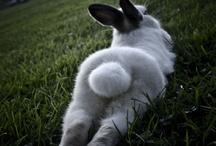 Bunny Butt :)