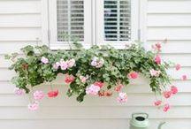 deck &  garden inspiration