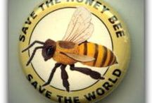 Bees.  Save the honeybee; save the world.