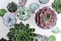 Greenspace / indoor gardening