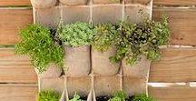 Houseplants/Gardening & Landscape