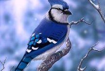 Birds / Bird, animal, wild life