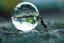 Bubles+Drops / Buble, water drop