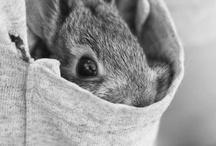 adorable things / by Merike Hess