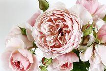 blooms we love