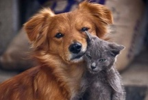Pets & Animals / by Angela Celeste