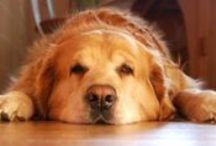 A Healthy Inside! / Great tips and ideas to keep your green, or aspiring green, dog's inside environment the healthiest it can be!