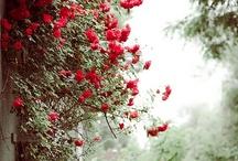 Red Hot / by Julie Molenda