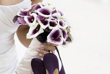 Purple Passion / by Julie Molenda