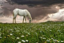 Horses / by Tyler Davis