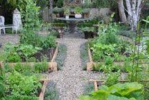 vegetable garden / helpful tips for starting little vegetable garden at home.