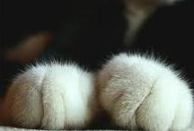Animals / by Joanna 💜 Birkett