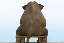 Elephants - Gentle Giants