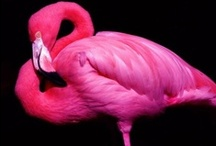 Flamingos - Pretty in Pink