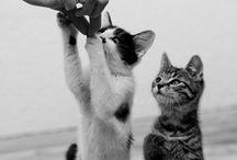Cats Lover / by Patti Cheshire, {AvantiCheshire.blogspot.com}