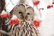 Owls crazy / by Patti Cheshire, {AvantiCheshire.blogspot.com}