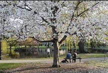 Spring in New England / by UMass Lowell