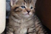 Kitty cats / Dave, Wayne, Wendy, myrtle, daisy and Tony