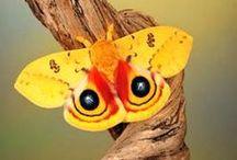 Butterflies, Moths, Catepillars