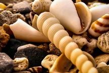 Seashells by the Seashore