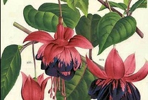 Botanical  and Floral Prints / by Judy Morris