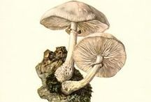 A Fungus Among Us / A fungi that produces a spore-dispersing body  consisting of a stalk topped by a fleshy, often umbrella-shaped cap. Some species of mushrooms are edible, though many are poisonous. Toadstools are poisonous mushrooms.
