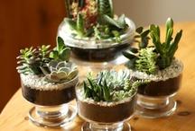 display ideas / by Lindsey | Hello Hydrangea